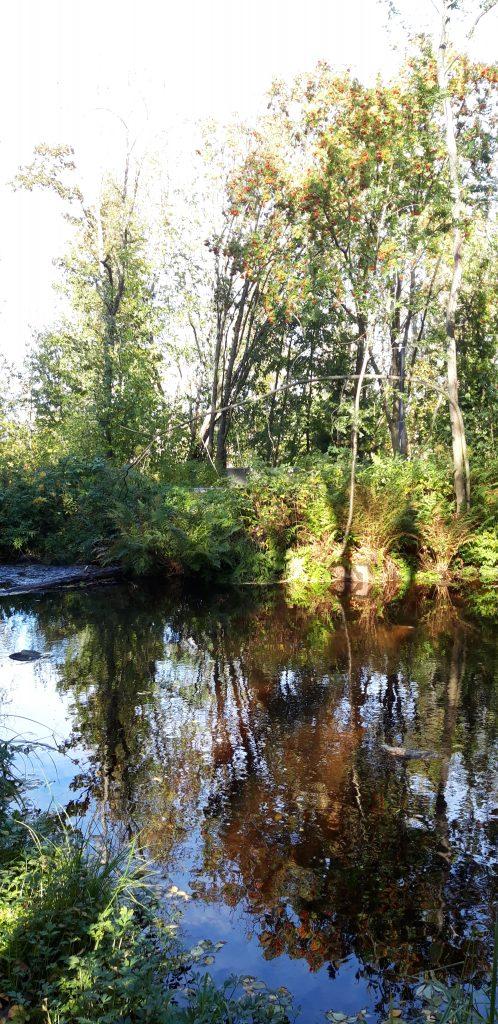 Joki, joen penkalla kasvaa vihreitä lehtipuita puita.