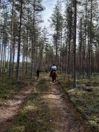 Ratsastaja metsäpolulla.