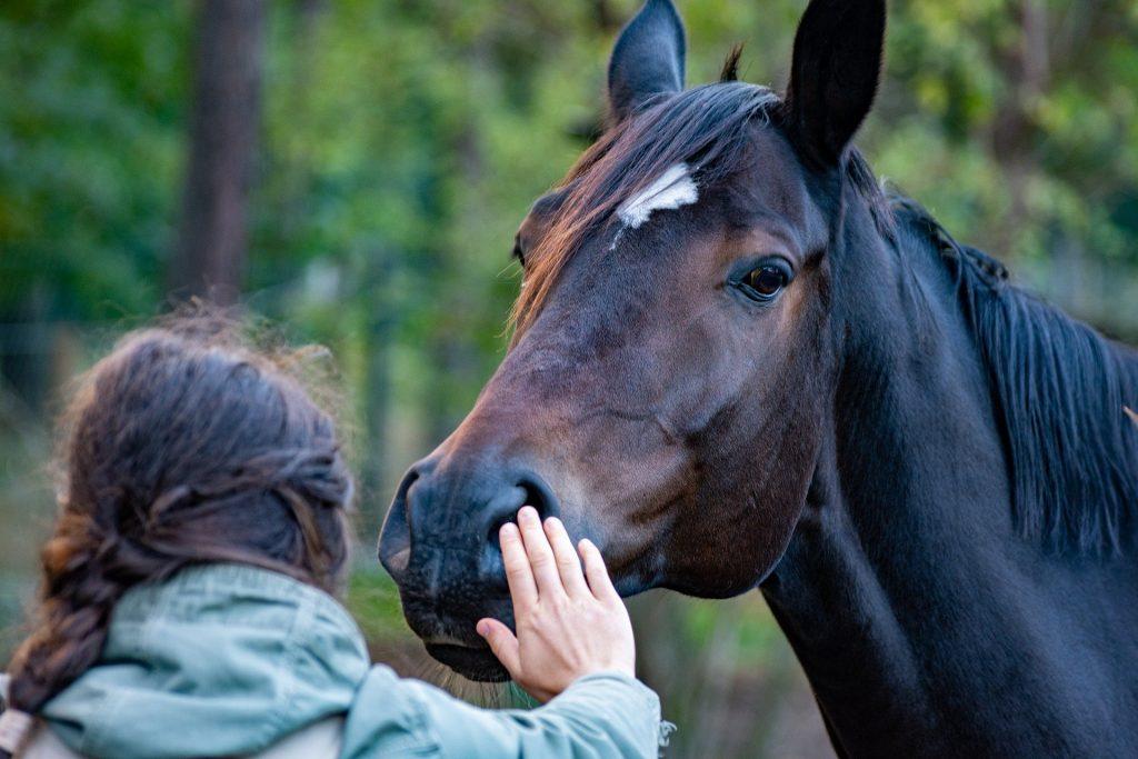Nainen koskettaa hevosta